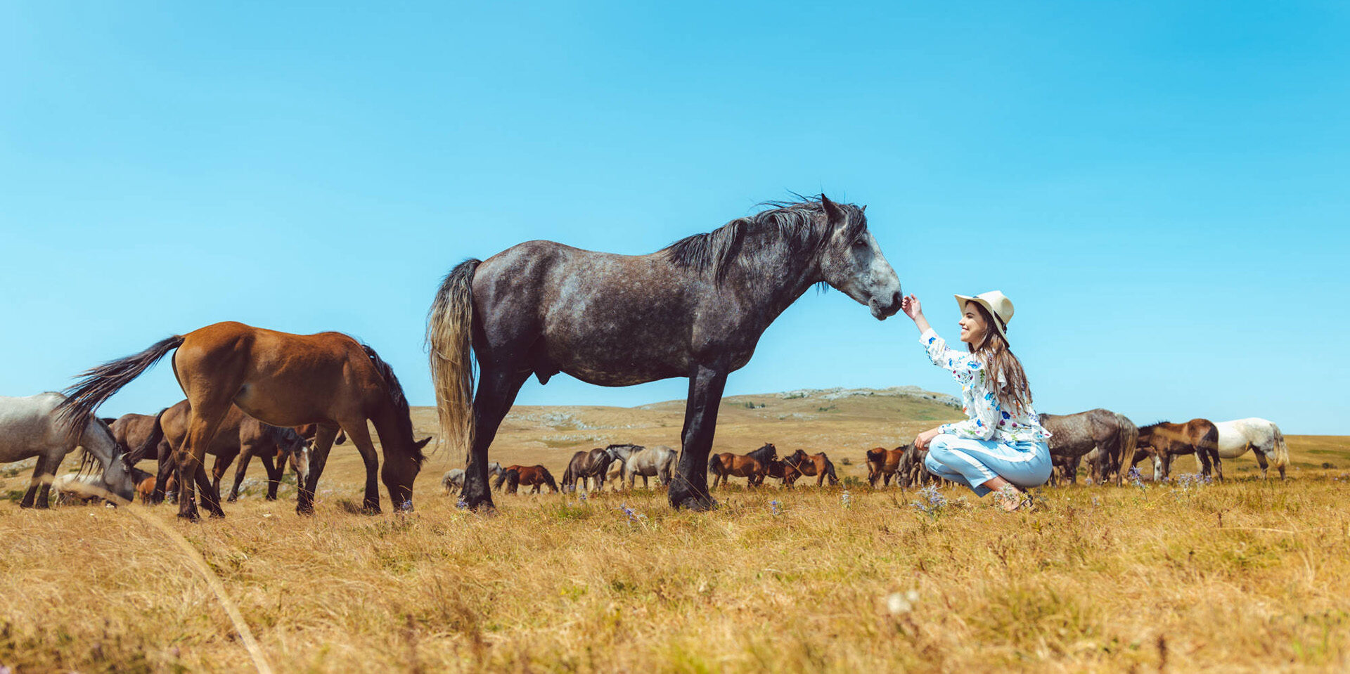 Livno Wild Horses